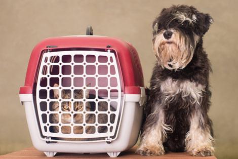 moving-pets-service